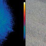 thermografie-wildtiere